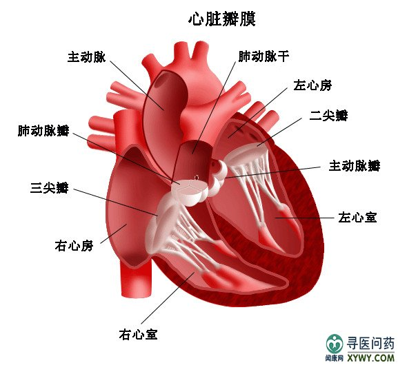 1、药物治疗法治疗冠心病:药物治疗是治疗冠心病的基础方法,主要是根据病情,在医师的指导下应用药物进行治疗。药物治疗冠心病可以缓解症状和稳定病情。 某些药物也可以延缓或减轻冠状动脉硬化的发展进程,积极控制引起血管硬化的危险因素,可达到既治疗又预防的作用。 2、再灌注治疗法治疗冠心病:再灌注治疗冠心病的方法是采取办法使闭塞的冠状动脉再通,恢复心肌灌注,挽救缺血心肌,缩小梗死面积,从而改善血液动力学,恢复心脏的血液供应。 看了上面的介绍,大家一定要知道治疗冠心病的原则,希望大家能够更好的治疗冠心病。其实治疗冠